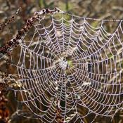 Gå på jagt efter edderkopper