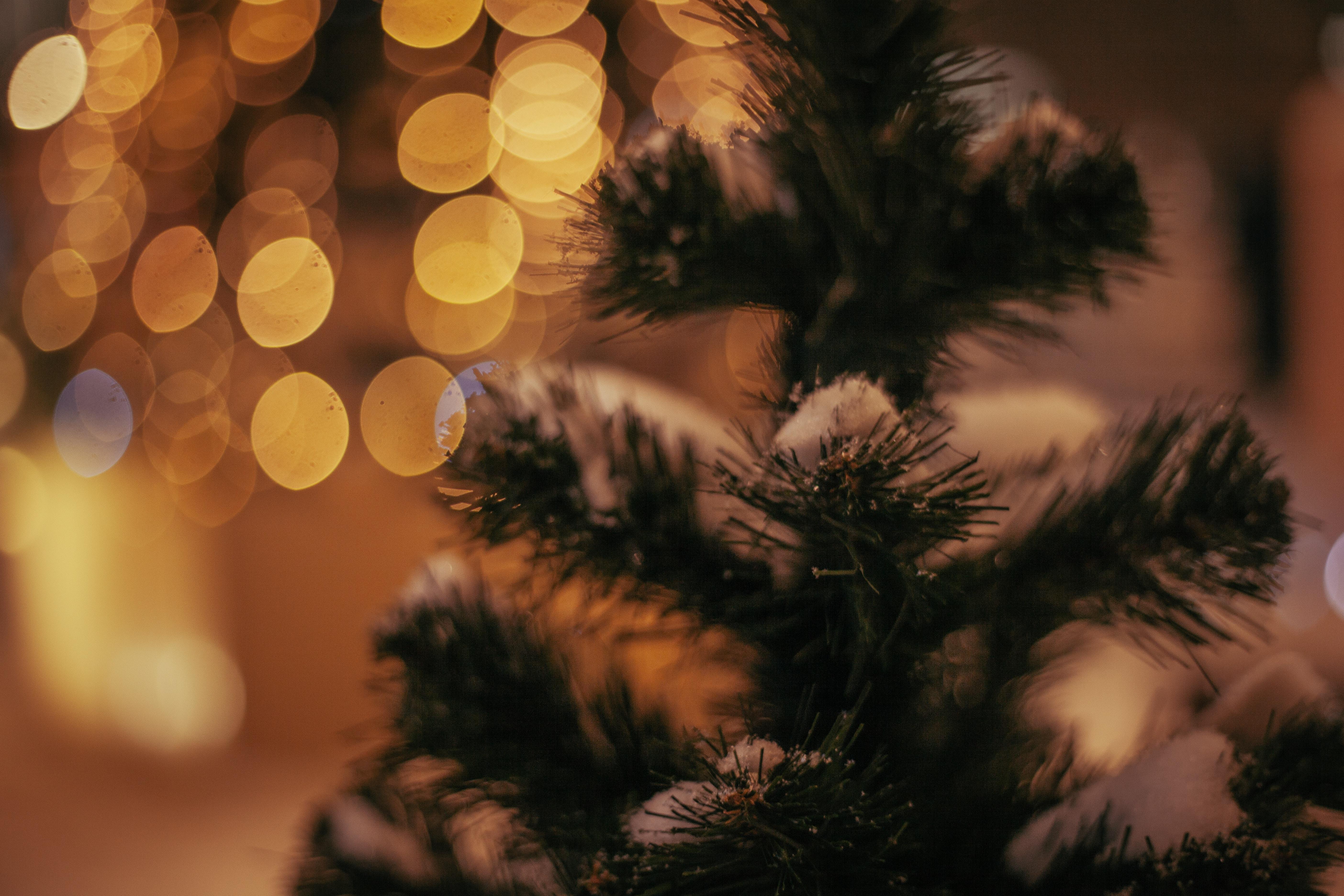 Jul i skoven