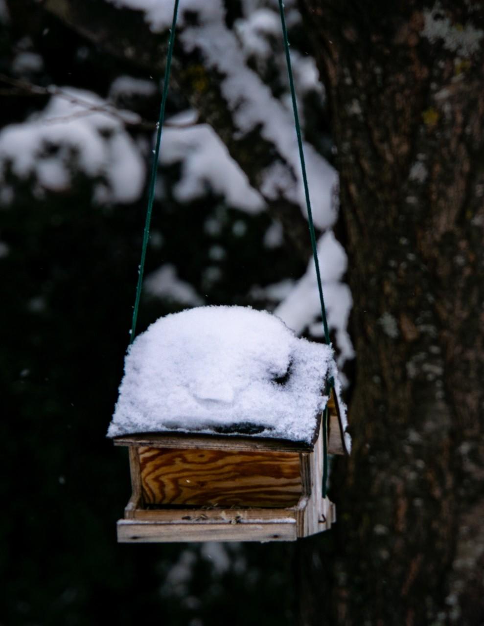 Byg en redekasse til fuglene