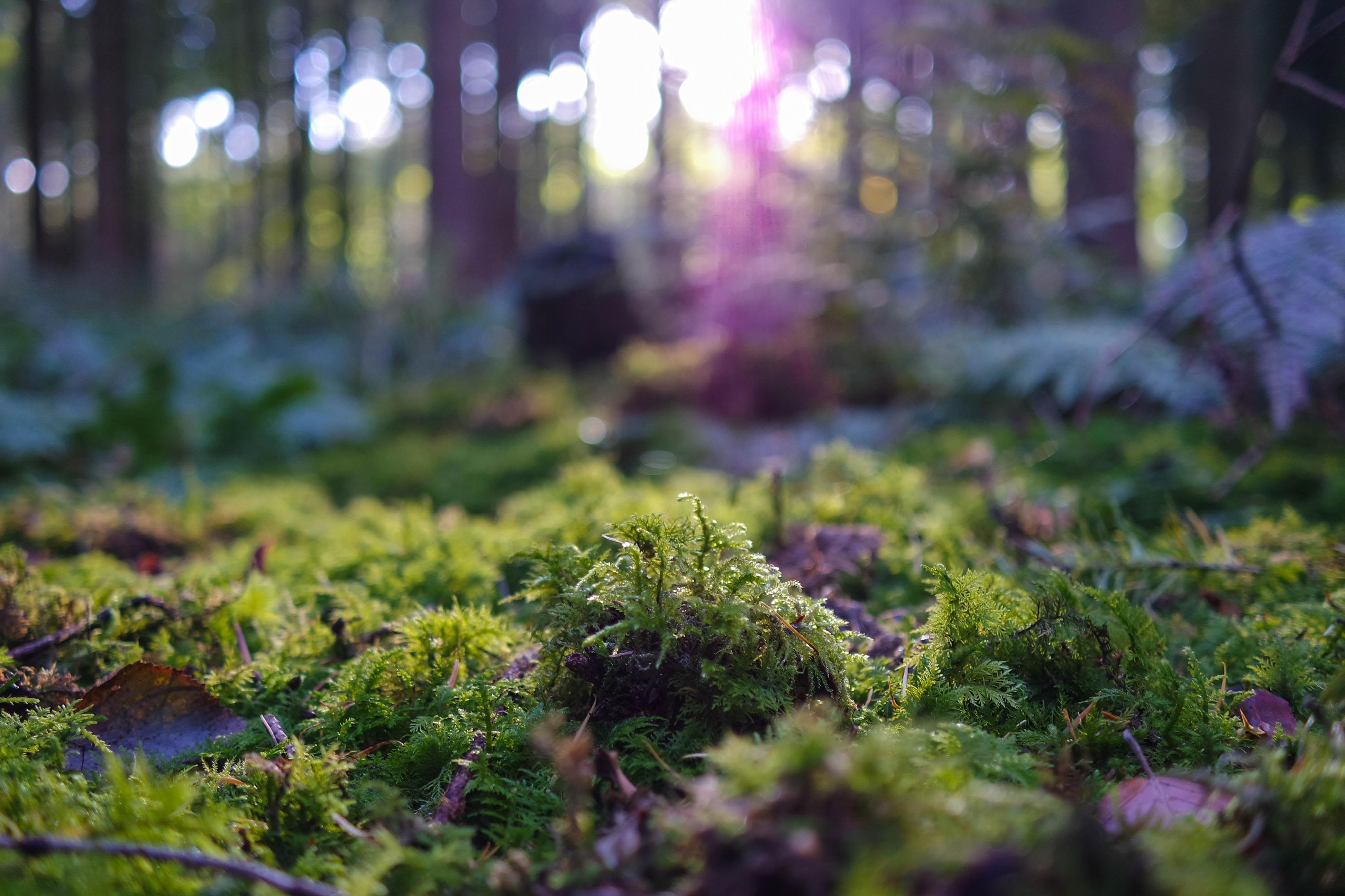 Lav flotte hængeplanter med mos fra skoven