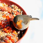 Lav vintermad til fuglene