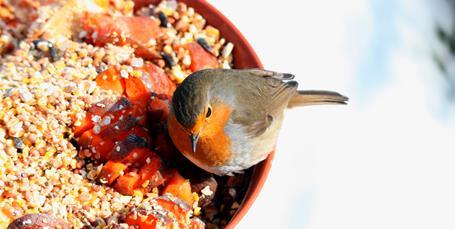 Invitér fuglene ind i haven