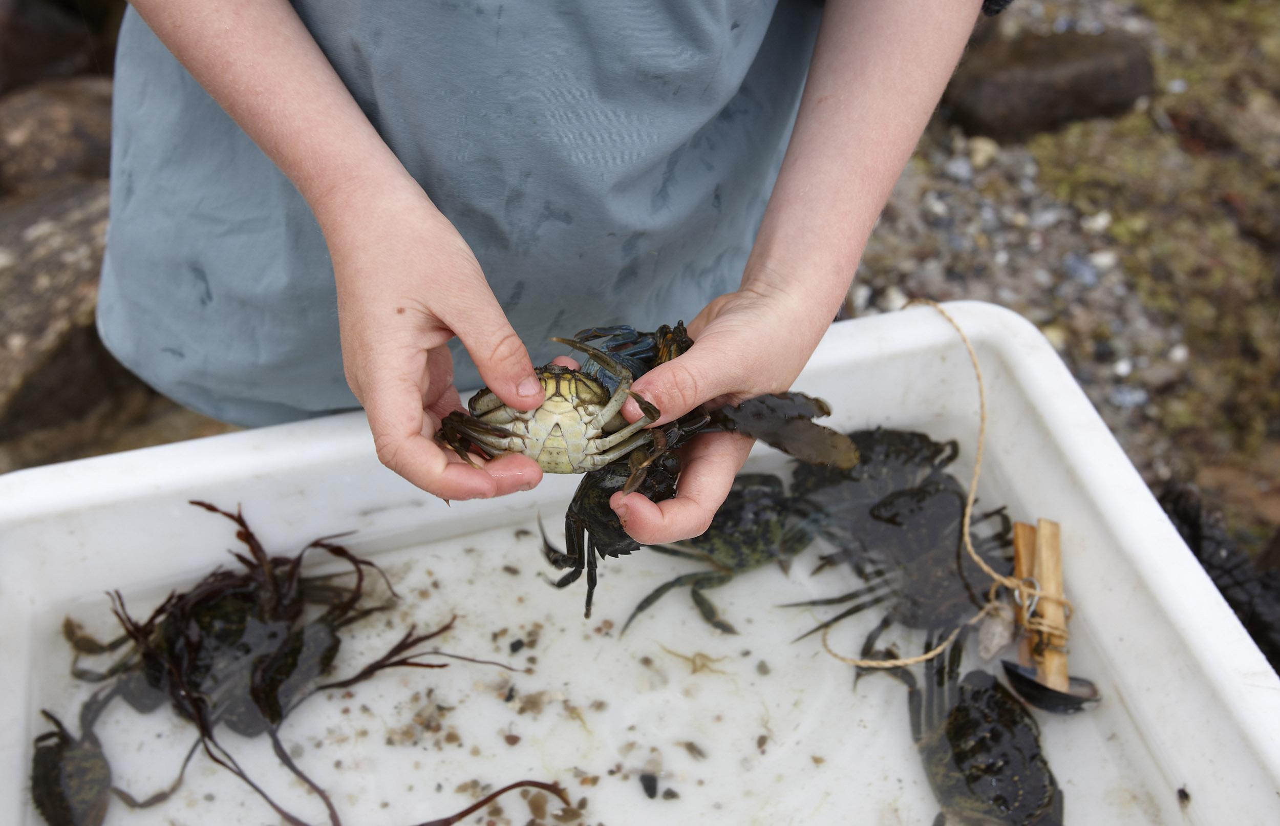 Tag på krabbejagt