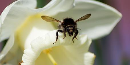 Kom tæt på bierne
